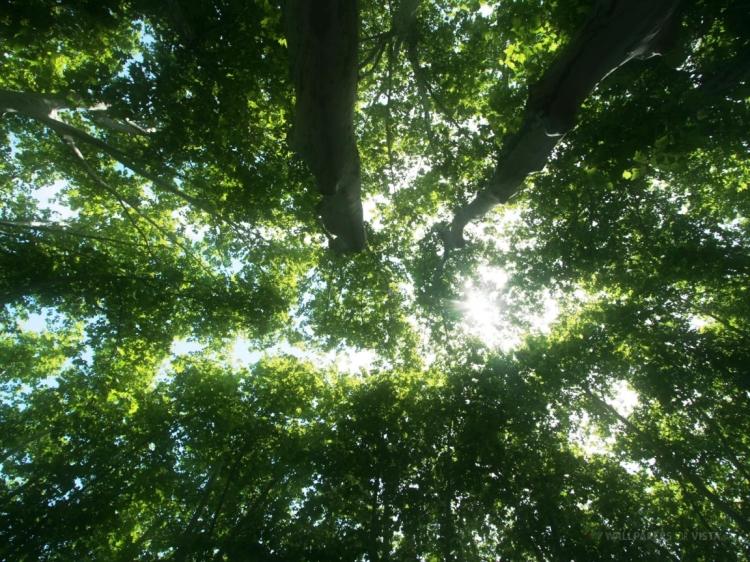 Tree-Tops1184267652-1152x8641